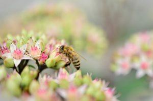 Méhpempő bolt válogatás a legjobb méhészetekből